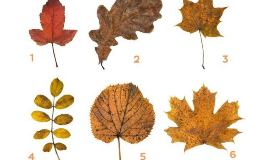 Τι είδους άνθρωπος είσαι; Διάλεξε 1 από τα 6 φύλλα και μάθε το!