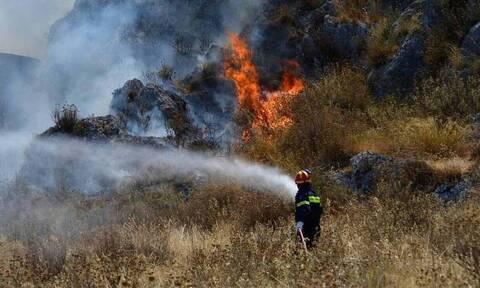 Άγιος Νικόλαος: Μεγάλη πυρκαγιά σε δασική έκταση - Επιχειρούν 60 πυροσβέστες