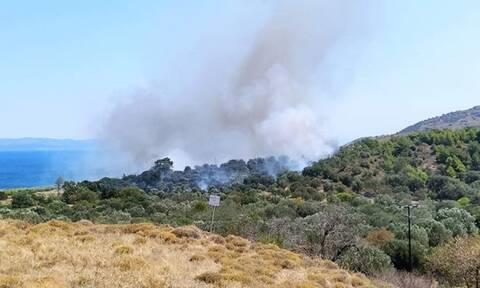 Φωτιά ΤΩΡΑ σε αγροτοδασική έκταση στη Μυτιλήνη