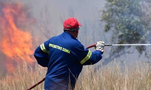Φωτιά ΤΩΡΑ: Πυρκαγιά στην περιοχή τηςΑρκαδίας