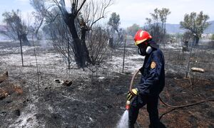 Μεγάλη φωτιά στο Συκάμινο Ωρωπού - Ισχυρές πυροσβεστικές δυνάμεις στο σημείο