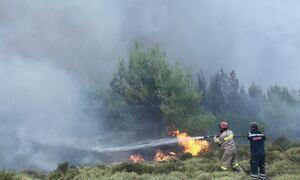 Φωτιά: Κλείνουν δρόμοι από το μέτωπο στον Βαρνάβα - «Μάχη» και στην Ελευσίνα