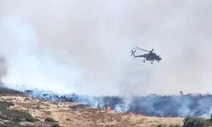 Φωτιά ΤΩΡΑ: Πύρινος εφιάλτης στη Χαλκίδα - Κοντά σε σπίτια οι φλόγες