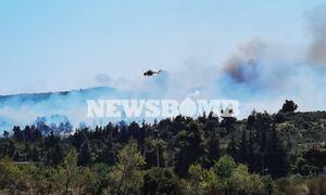Φωτιά στη Σταμάτα: Δήμαρχος Διονύσου στο Newsbomb.gr - «Οι φλόγες γλείφουν τα πρώτα σπίτια»