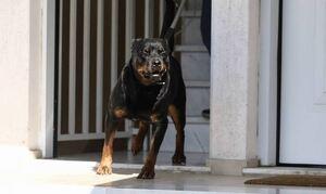 Θάνατος 5χρονου από ροτβάιλερ στην Κοζάνη: Ένοχοι οι ιδιοκτήτες των σκυλιών