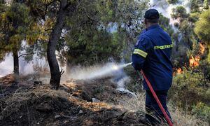Φωτιά ΤΩΡΑ στην Αργολίδα - Συναγερμός στην Πυροσβεστική